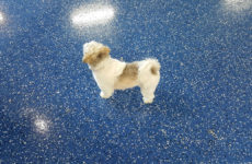 05052018-dog-grooming-salon-refinished-floor-raleigh-1